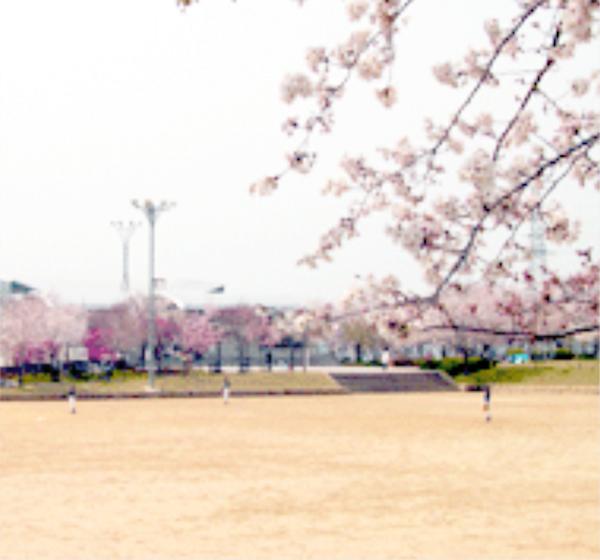 さくら公園グラウンド(さくら公園運動場)
