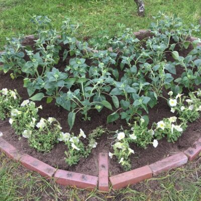 ハート形花壇